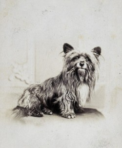 archaicwonder:  Greyfriars Bobby, 1865  Greyfriars Bobby was a Skye Terrier who became known in 19th-century Edinburgh for spending 14 years guarding the grave of his owner, John Gray (Auld Jock), until he died himself on 14 January 1872. A year later, Lady Burdett-Coutts had a statue and fountain erected at the southern end of the George IV Bridge to commemorate him.