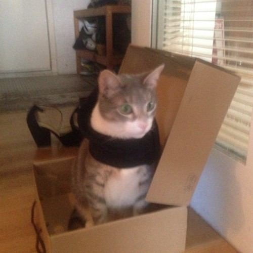 dpstyles:  Damn hipster cats and their scarves taking over the neighborhood! (at @PNIZZLE's House Of Satisfaction)