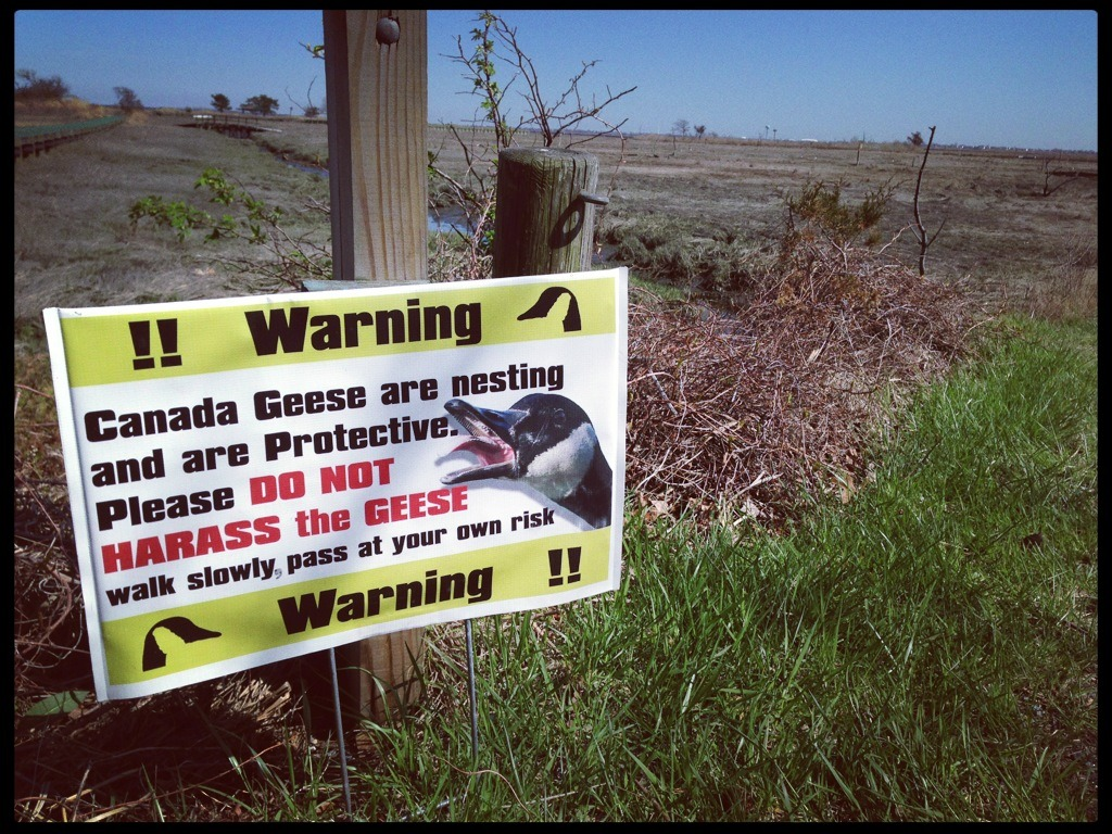 Canada Geese Warning. #birds #signs #wildlife http://mob.li/_Lfsu6