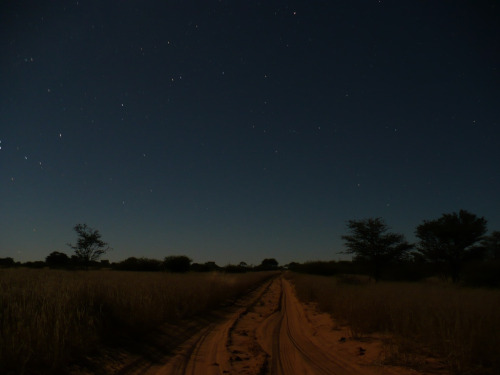 Kalahari night and the road goes on forever.