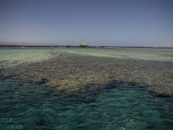 Diving in Sharm el Sheikh on Flickr.Those Huge beautiful Reefs!