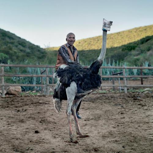 Niklaas Ockers, an ostrich Jockey. Oudtshoorn, Western Cape,