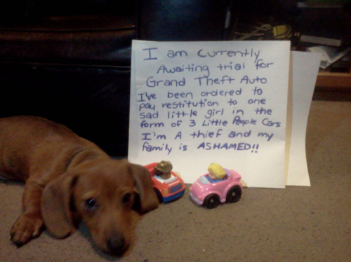 "dogshaming:  Toy Thief  ""I am currently awaiting trial for grand theft auto. Ive been ordered to pay restitution to one…  View Post"