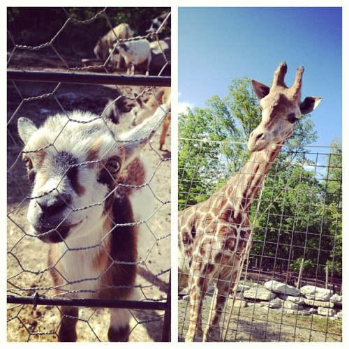 Let me love you.  (at Catoctin Wildlife Preserves and Zoo)