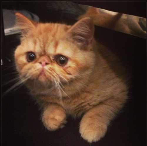 jelena-all-news:  @kemalandkarla : Hey @justinbieber it looks like Toots is giving@concernedkitty a run for her money!
