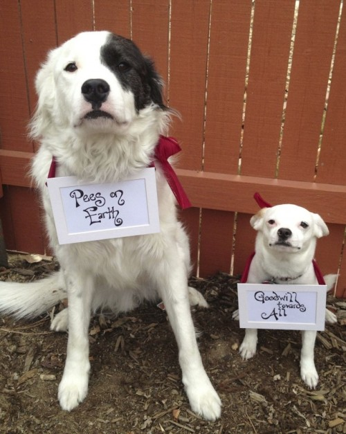 dogshaming:  Dog Holiday Pees On Earth, Goodwill Towards All. Happy holidays from Sudo (L) and Ping (R).View Postshared via WordPress.com