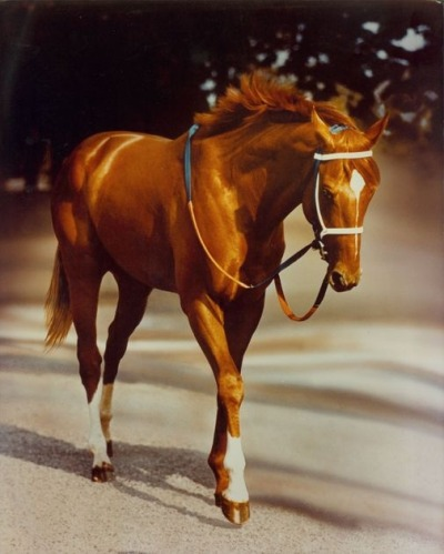 keepcalmandcollectbreyer:  gypsymoonsister:  Secretariat at the Belmont is one of equine photographer Tony Leonard's most well-known photos. It was his wife Adelle's idea to airbrush the groom out of the photo. Mr. Leonard passed away on July 14, 2012. Big Red died in 1989.  He was so beautiful, and he even looks like a champion. Horses like him in the racing world are very rare now :/