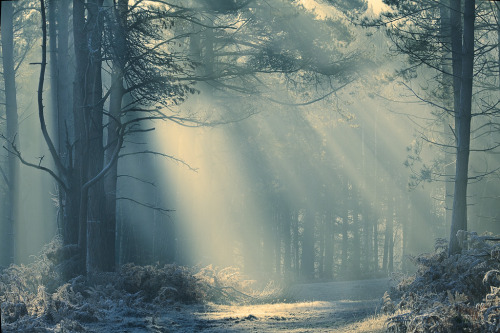 oblivi0n-:  Forest light (by milouvision)
