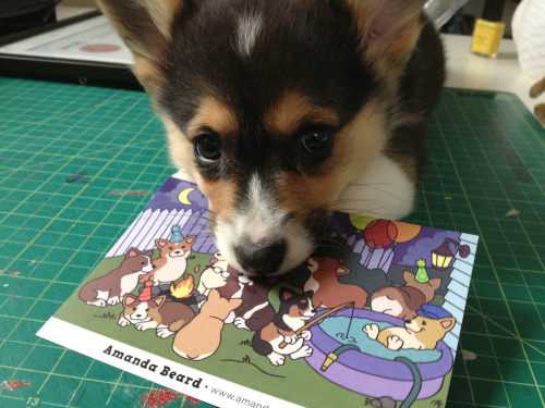picathecorgi:  Pica likes the arts  I couldn't resist