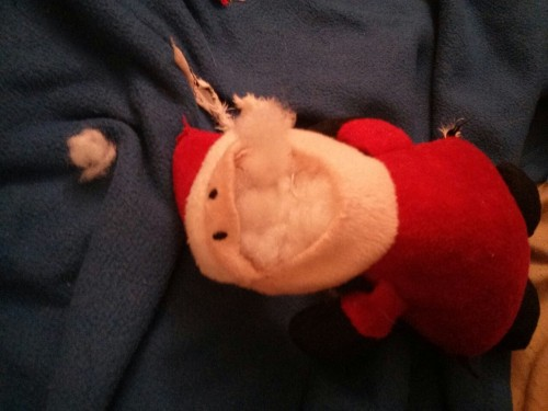 Appa, the Santa killer. I have no idea how he ripped off Santa's mouth perfectly but saw the aftermath with Santa stuffing scattered in the living room.