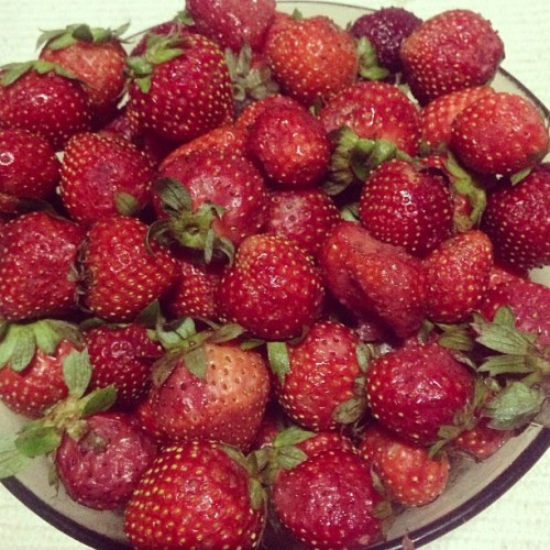 Strawberries fresh from Baguio City #food #fresh # strawberry #sweet #cute #red #photooftheday #bestoftheday #instaphoto #ig #igers #ighub (at Baguio City)