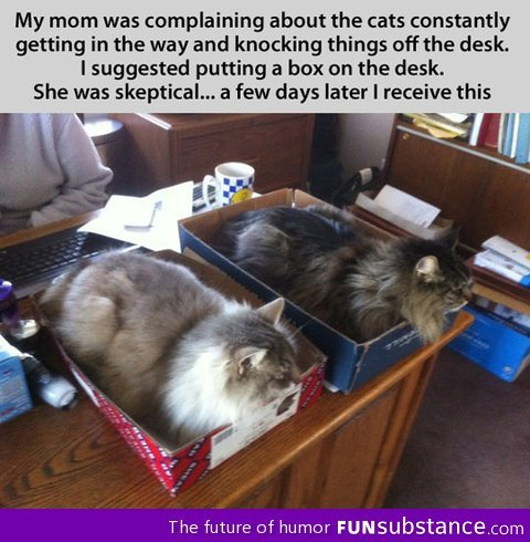 funsubstance:  The cat traps worked
