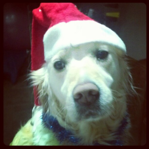 CHRISTMAS DOGGY