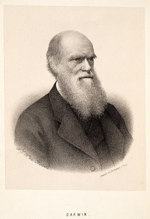 February 12, 1809 Charles Darwin was born. To commemorate this, and the impending Valentine's day holiday, some musings on marriage from our beloved Chuck D. courtesy of Darwin online. excerpts from Darwin, C. R. 'This is the Question Marry Not Marry' [Memorandum on marriage]. (7.1838) CUL-DAR210.8.2 (Darwin Online, http://darwin-online.org.uk/) This is the question Marry  Children — (if it Please God) — Constant companion, (& friend in old age) who will feel interested in one, — object to be beloved & played with. — —better than a dog anyhow. — Home, & someone to take care of house — Charms of music & female chit-chat. — These things good for one's health. — Forced to visit & receive relations but terrible loss of time. —  W My God, it is intolerable to think of spending ones whole life, like a neuter bee, working, working, & nothing after all. — No, no won't do. — Imagine living all one's day solitarily in smoky dirty London House. — Only picture to yourself a nice soft wife on a sofa with good fire, & books & music perhaps — Compare this vision with the dingy reality of Grt. Marlbro' St.  Marry — Marry — Marry Q.E.D. Not Marry  No children, (no second life), no one to care for one in old age.— What is the use of working 'in' without sympathy from near & dear friends—who are near & dear friends to the old, except relatives  Freedom to go where one liked — choice of Society & little of it. — Conversation of clever men at clubs — Not forced to visit relatives, & to bend in every trifle. — to have the expense & anxiety of children — perhaps quarelling — Loss of time. — cannot read in the Evenings — fatness & idleness — Anxiety & responsibility — less money for books &c — if many children forced to gain one's bread. — (But then it is very bad for ones health to work too much)  Perhaps my wife wont like London; then the sentence is banishment & degradation into indolent, idle fool — more Darwin:Charles Darwin's library on the Biodiversity Heritage Library Our first edition of On the Origin of Species also on BHL.