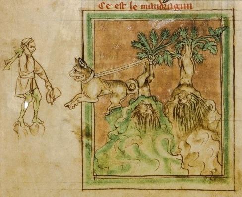 nihtegale:  Harvesting mandrakes, c.1265-1270