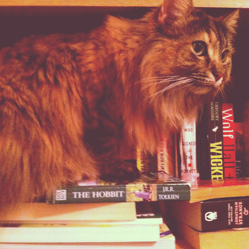 get out of there cat. you are not a novel for me to read.