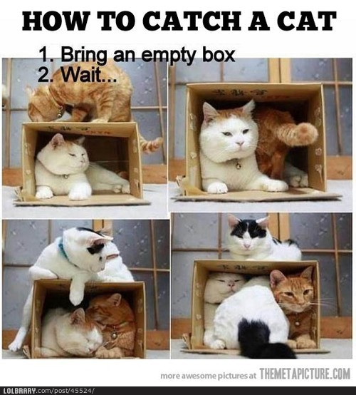 dailyhilariouspics:  How to catch a cat Follow this blog for the best new funny pictures every day