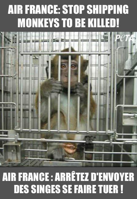 Stop Air France From Shipping Monkeys to Their Deaths! TAKE ACTION!