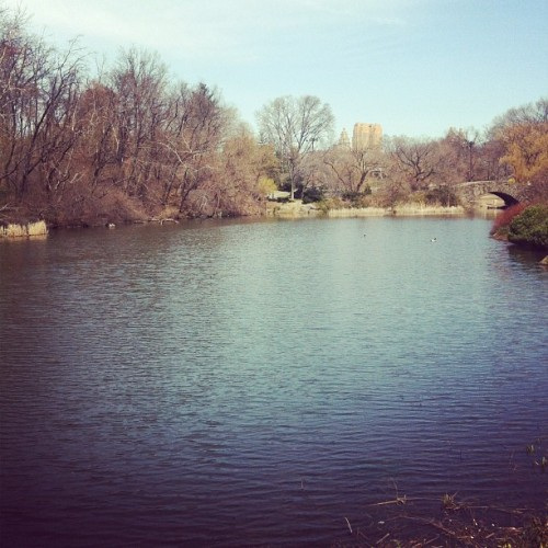 Home, always #nyc #centralpark #dayoff #sun #spring