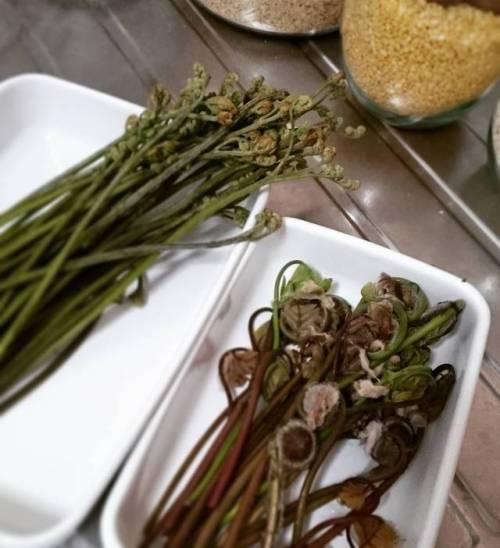 蕨にぜんまい灰汁抜き大会。今日は竹の子と一緒に炊き込みご飯だな。 (Awaji, Hyōgo)