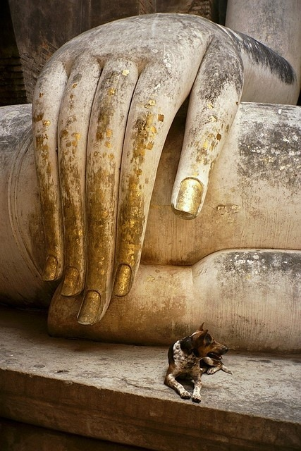 thepaintedbench:  Beneath the Hand of Buddha
