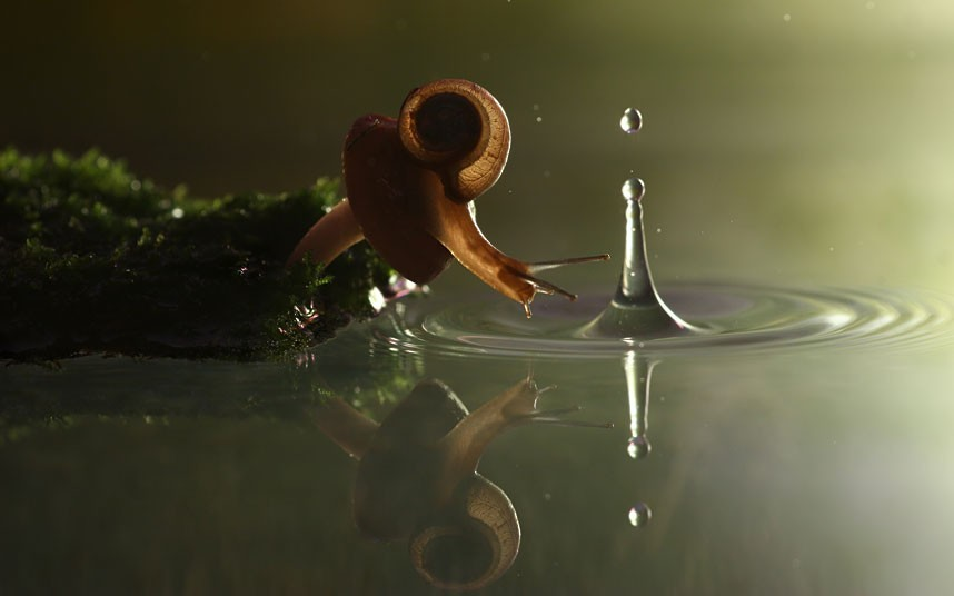 Balancing the Water Vadim Trunov's macro photos of snails (and other insects) in watery worlds are pretty stunning. Actually, they are totally stunning. Check out a slideshow here. They remind me of why snails are found around water so much, and the simple chemistry of killing them with salt. Terrestrial snails (and slugs) are descended from aquatic creatures, all in the gastropod family. Although they have adapted to life outside of the water, they require a coating of mucus all over their exposed tissues to keep their soft tissues from drying out in the air. This water must constantly be resupplied from their environment, be it dew or a puddle.  When you pour salt on a snail or slug, you start an avalanche of osmosis, with water from inside the snail's cells rushing out to try and balance the salt concentration inside and out. It dries up like a pickle. A murderous chemistry, no? Although if you salt them after they're cooked, maybe with butter … they're delicious. (sketch via Janet Stemwedel)