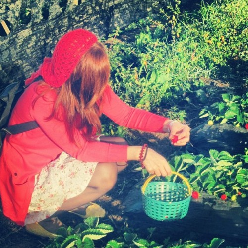 Little #redhead on a #strawberry hunt! #happykid 😍🍓 (at Strawberry Farm; Benguet )