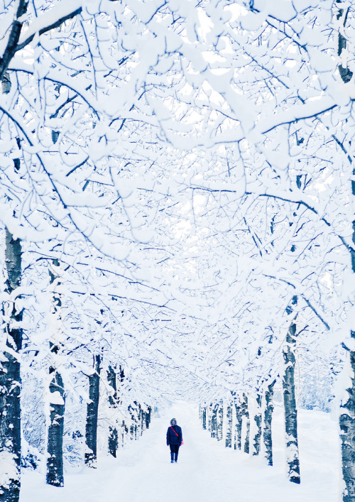 7000stars:  Winter Wonderland (by oskarpall)
