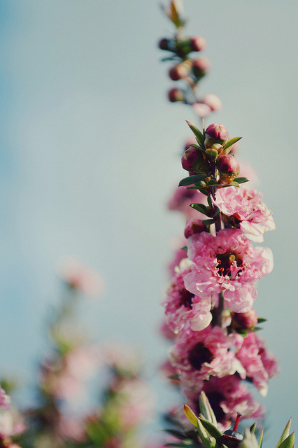 fleurs by ébènesubtile on Flickr.