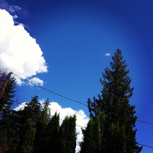 POV chillin in the grass under the sun #summer #sky #bluesky #trees #kootenaylove