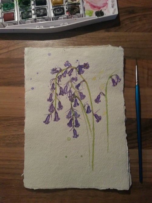 Seeing the bluebells in bloom earlier inspired a little botantical painting. I think I'll do a series of these featuring various springtime plants.