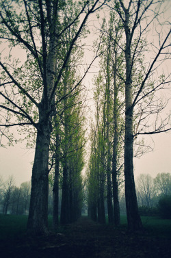 refluent:  We are 90 years old trees that why we are a lot taller than u. (by TiiimChao)