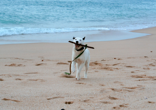 Yuki's first visit to the beach!