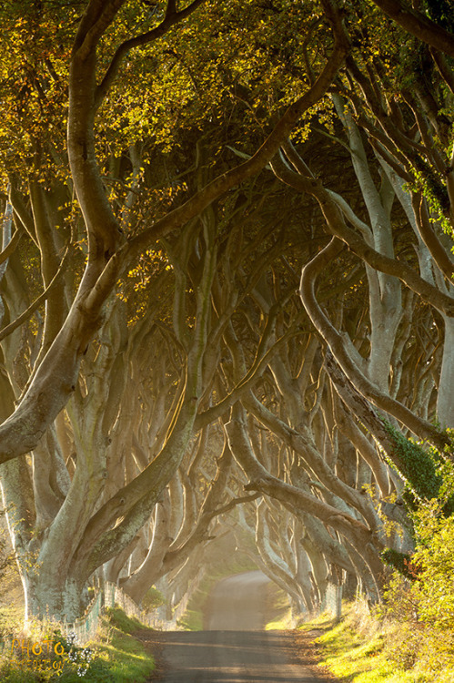 magicalnaturetour:   Eugene Remy ~ Dark Hedges