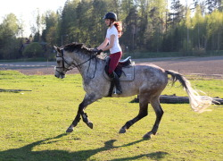 paska:  field-riding yesterday!