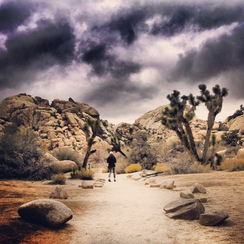 #outdoor #travel #joshuatree #cali #cali_igers #california #xs #yoga #explore #experience #life #like #live #liveincolor #inthemoment #insta #instahub #instagood #webstagram #beauty #beautiful #girl #steveosw #steveslefteye #isstevestillalive #kileyandsteveroadshow #boulder #roadtrip #rocks #desert #adventure #hike