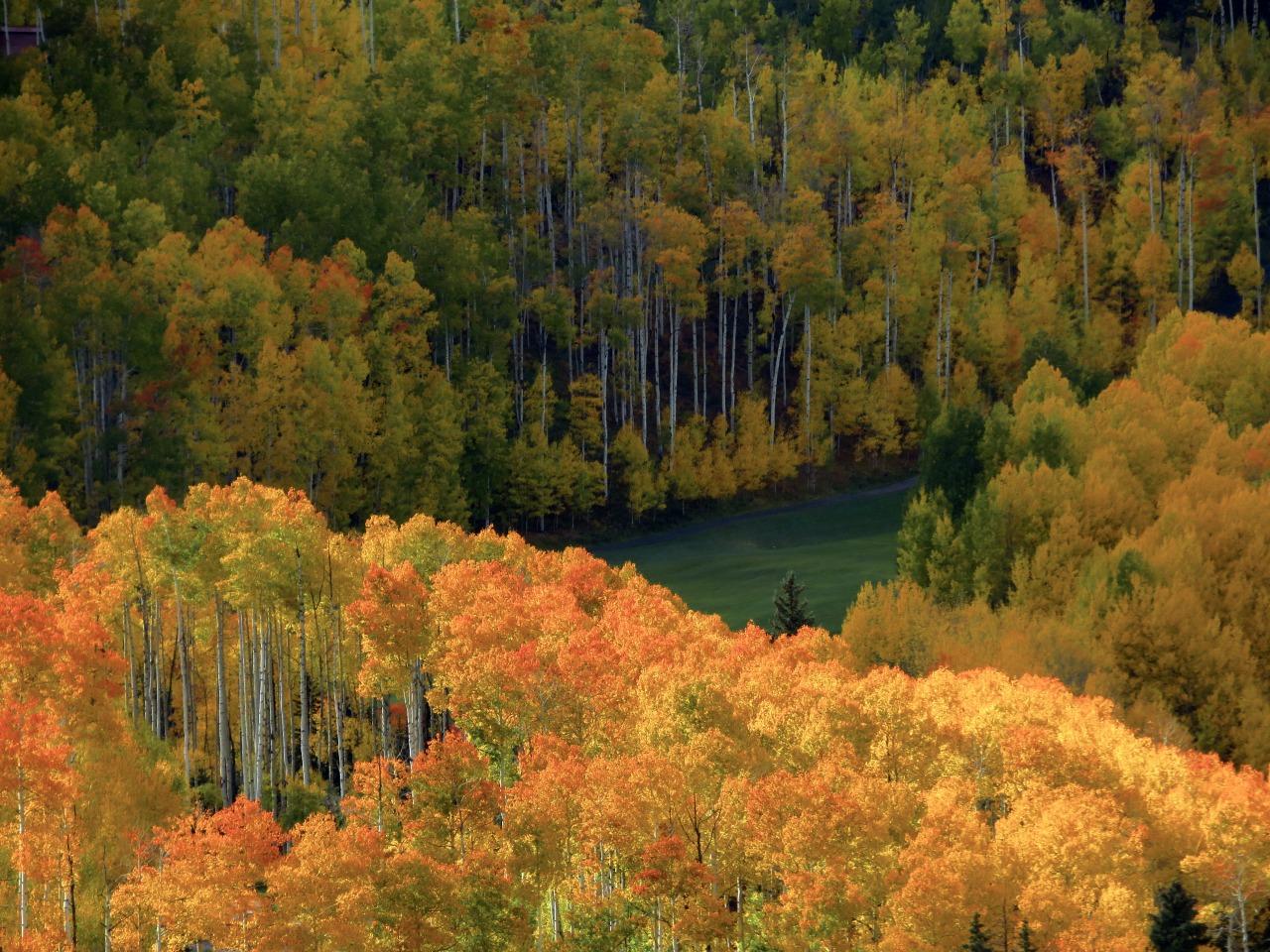 Telluride Autumn #my photos#original photography #photographers on tumblr #imiging#fall colors#telluride#colorado#aspens