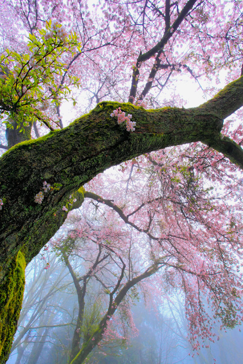 woodendreams:  (by Shohei Katsuki)
