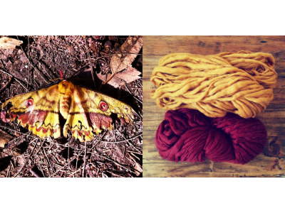 Color palette. Moth found at the park & Habu Slubby Soft Wool  … Paleta de color. Polilla encontrada en el parque & madejas de Lana de Habu