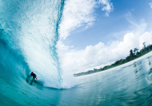 surf4living:  alex in the barrel. by tom curren