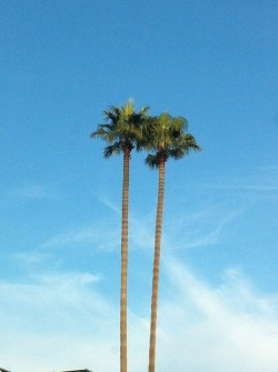 Palm trees, Los Angeles Photo: Dyanne Cano
