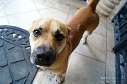 dog mine quality quality blog i love him very much