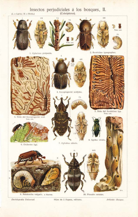 aycarambas:  Beetles Antique Chromolithograph Coleoptera Harmful Insects at CarambasVintage http://etsy.me/15e0K6d