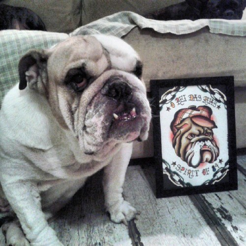 Pancho king ao lado do presente que ganhou do @erasmozutter. #bulldog #friend #street pride #Tattoo #spirit of #84 #luckyloot #firma