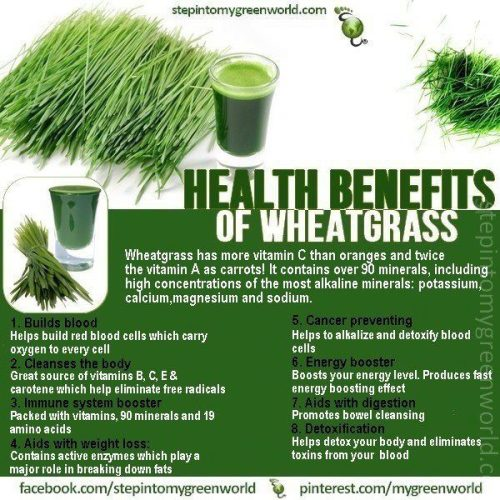 Wheatgrass and other nutrition information