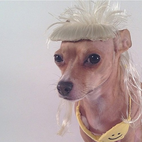 mermaidriots:  peachyteen:  annabellehector:  Posing  yolandi  omfg it is.