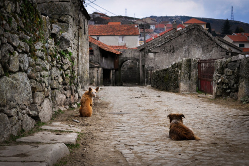 cafiamo:  Waiting for something.Sometimes I do believe dogs have more humanity  than we do.  I think so.