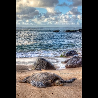 ishawaii:  Feel like this guy on this Lazy Sunday🐢😴 ~~~~~~~~~~~~~~~~~~~~~~~~~~~~~~~~~~ 🀄HDR_Dynasty™🀄 Where Creativity meets Unity 🀄LOOK US UP:🀄 @hdr_dynasty #hdrdynasty ~~~~~~~~~~~~~~~~~~~~~~~~~~~~~~~~~~ ⬇💢SHOWIN LUV💢⬇ #hdr_pics #hdrhunter #hdrstyles_gf #skystyles_gf #landscapestyles_gf #gf_daily #gf_usa #water_shots #rebels_united ~~~~~~~~~~~~~~~~~~~~~~~~~~~~~~~~~~ — photo taken by annonymous_1277