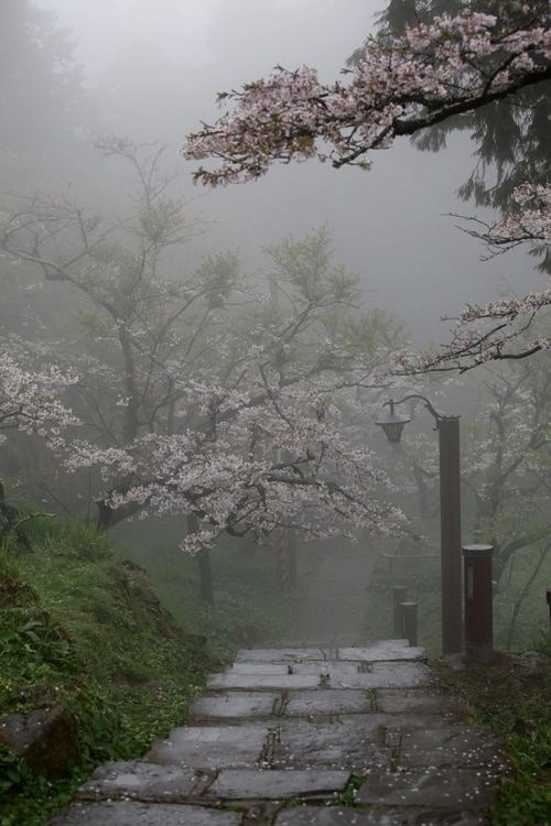 bluepueblo:  Fog, Cherry Blossom Path, Taiwan photo via laura