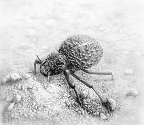 "Tanzanian Beetle by Zel Stoltzfus Description by the artist: ""This is a beetle whose picture I snapped in 2008 at Lake Natron, Tanzania. Sometimes an organism sums up a place so well and this scrubby little beetle seemed a fitting figurehead for the parched landscape surrounding around the brackish soda lake"""